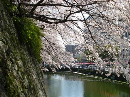 21.4.3静岡祭りの桜 08422