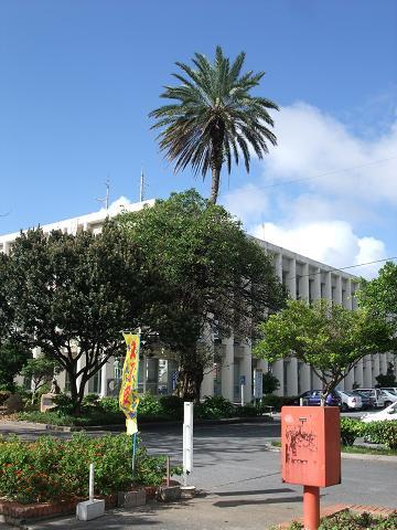 宜野湾市役所の合体木 2