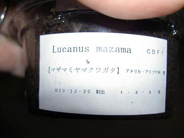 マザマミヤマ