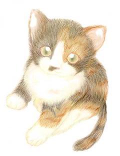 090508ちょこ初描きイラスト