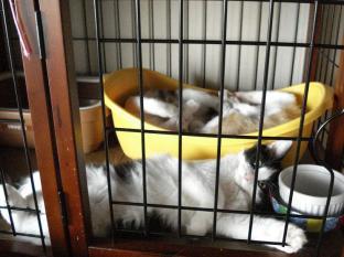 090521子猫寝姿1