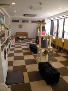 090528猫まるカフェ店内