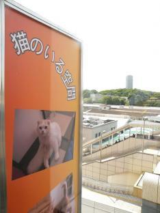 090528猫まるカフェ看板