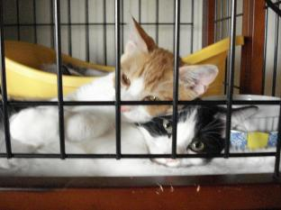 090521子猫寝姿3