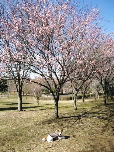 9長岡公園149
