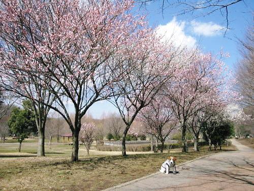 9長岡公園164