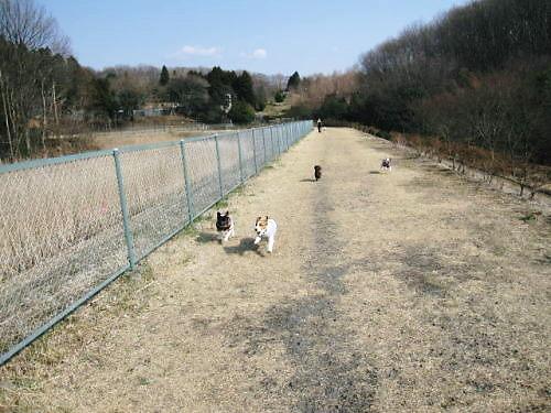 9長岡公園175
