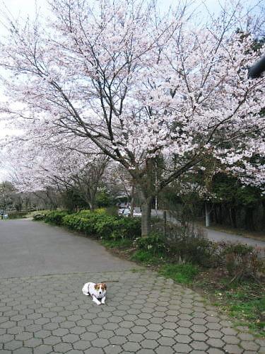 9長岡公園227