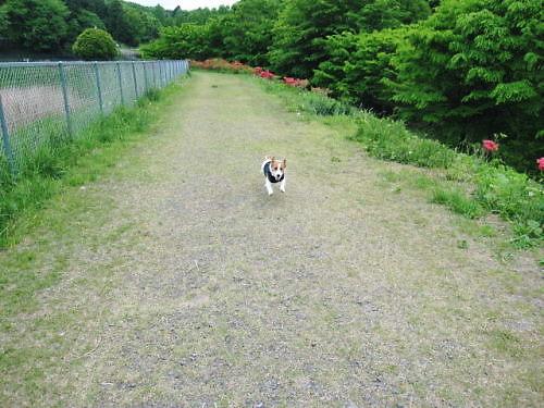 9長岡公園318