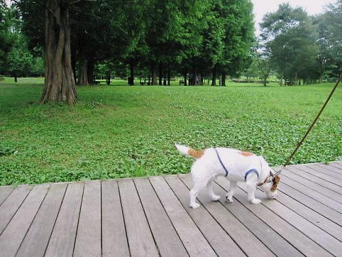 9長岡公園540