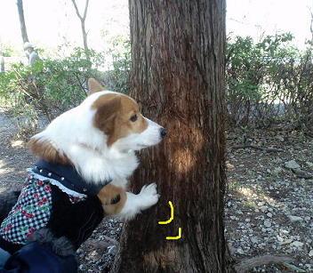 つめとぎ木