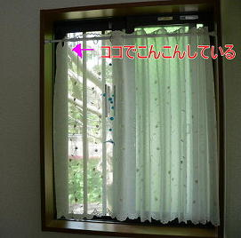 撮影窓(1)(1)