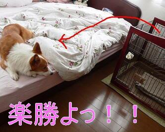 軽々とジャンプ(1)(1)