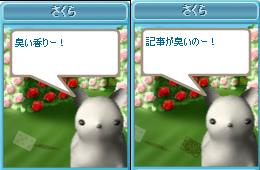 090913さくら(ゆうがたちゃんから2♪)