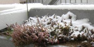 USJも今日は雪です