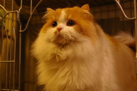 IMGP8163-猫