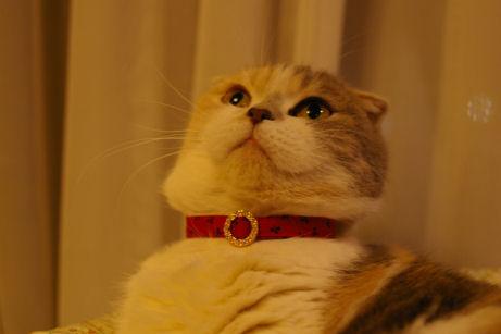 IMGP8164ー猫