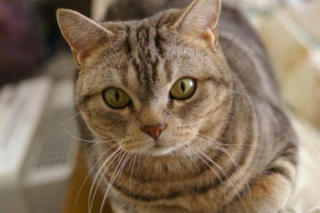 IMGP8172ー猫