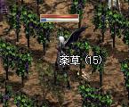 LinC1799_06.jpg