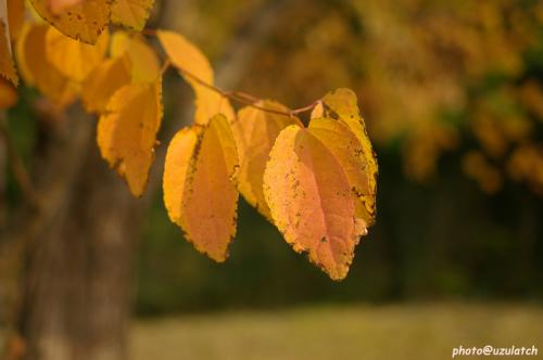 色づく葉02