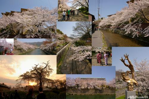 sakura景色