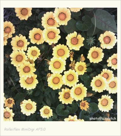 真上の花たち