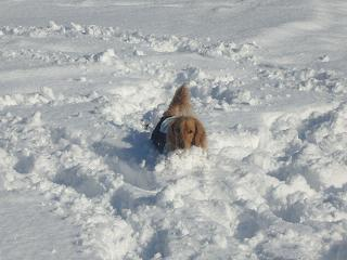 雪に埋もれる