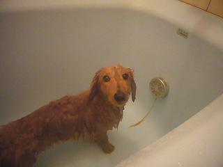 風呂場です♪