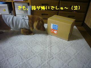 箱怖い><