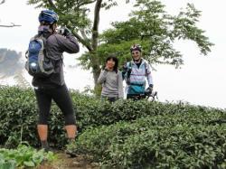 阿里山 18号 茶畑1