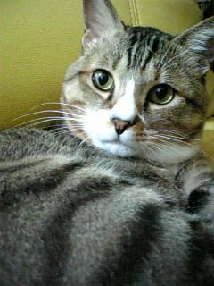 20070109034911.jpg