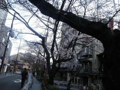 京都花見1