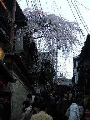 京都花見3