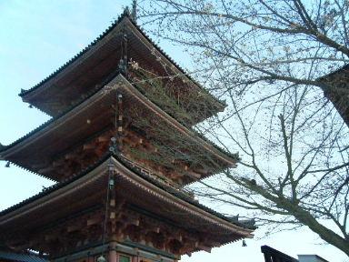 京都花見6