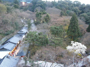 京都花見7