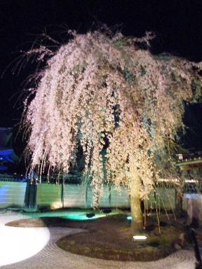 京都花見10