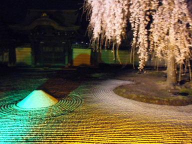 京都花見11