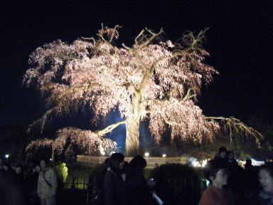 京都花見14