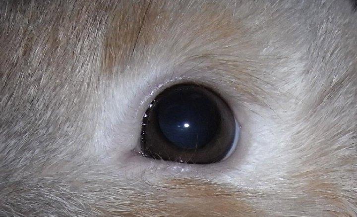 もふもふした目