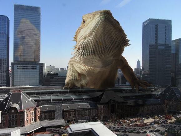 モカラ東京駅に現る