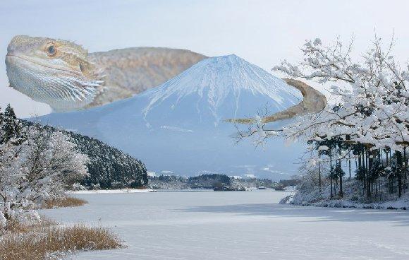 モカラ富士山に現る