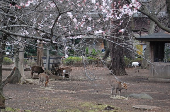 梅と鹿と鶴と