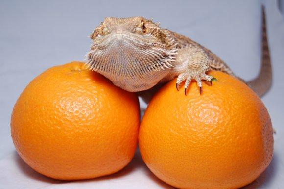 柑橘系モカ