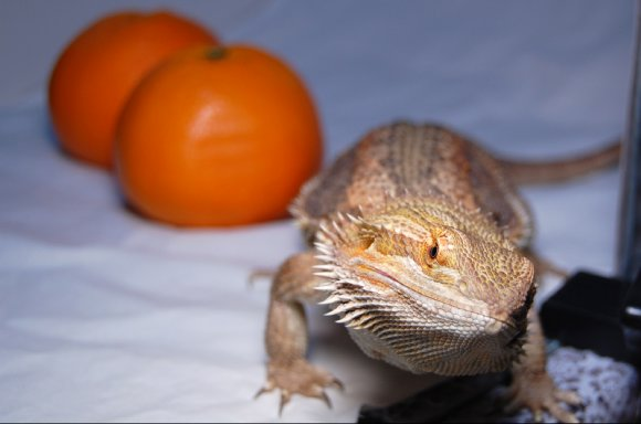 モカと柑橘
