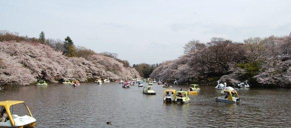春の井の頭公園4
