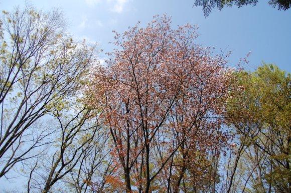 色とりどりの木