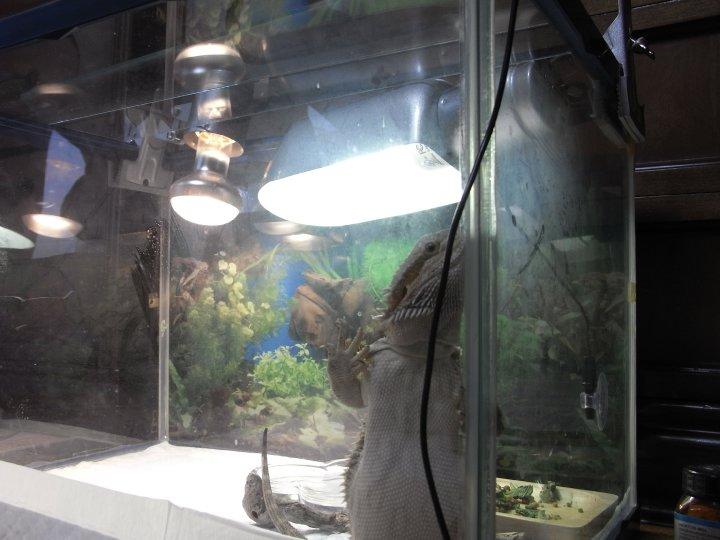 水棲生物モカ2