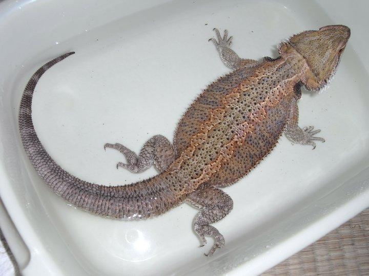 現在のモカ入浴中