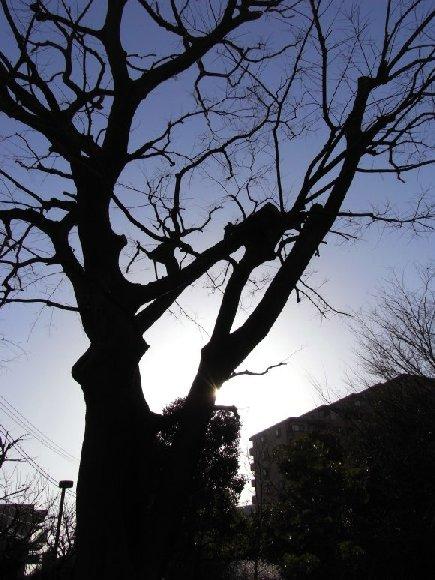 冬の木と朝の光