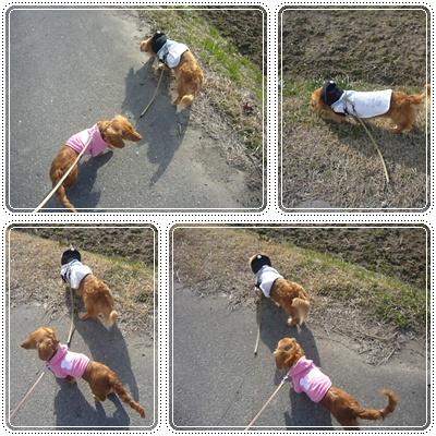 仲良く散歩★